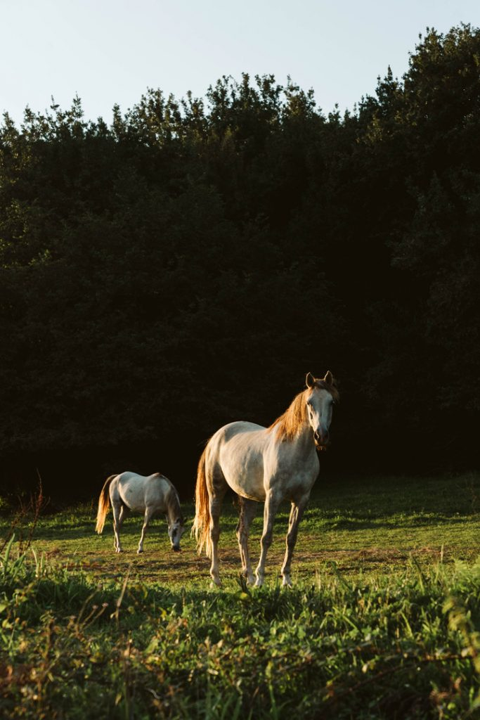 Portrait photo of two horses in the green landscape of Cantabria, Spain.